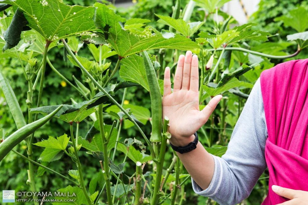 富山 家庭菜園 大根の種まき 8