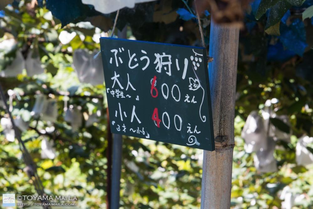 東福寺按田ぶどう園 富山 ぶどう狩り 滑川 2